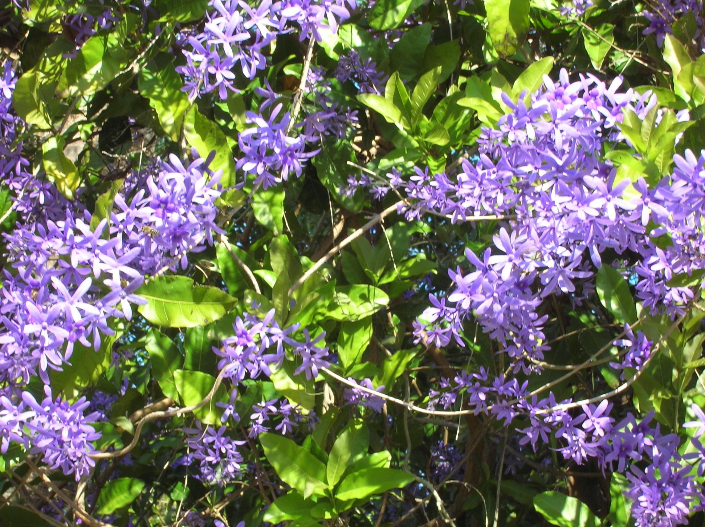 Flowering Almond Tree Lundvik Lyrics