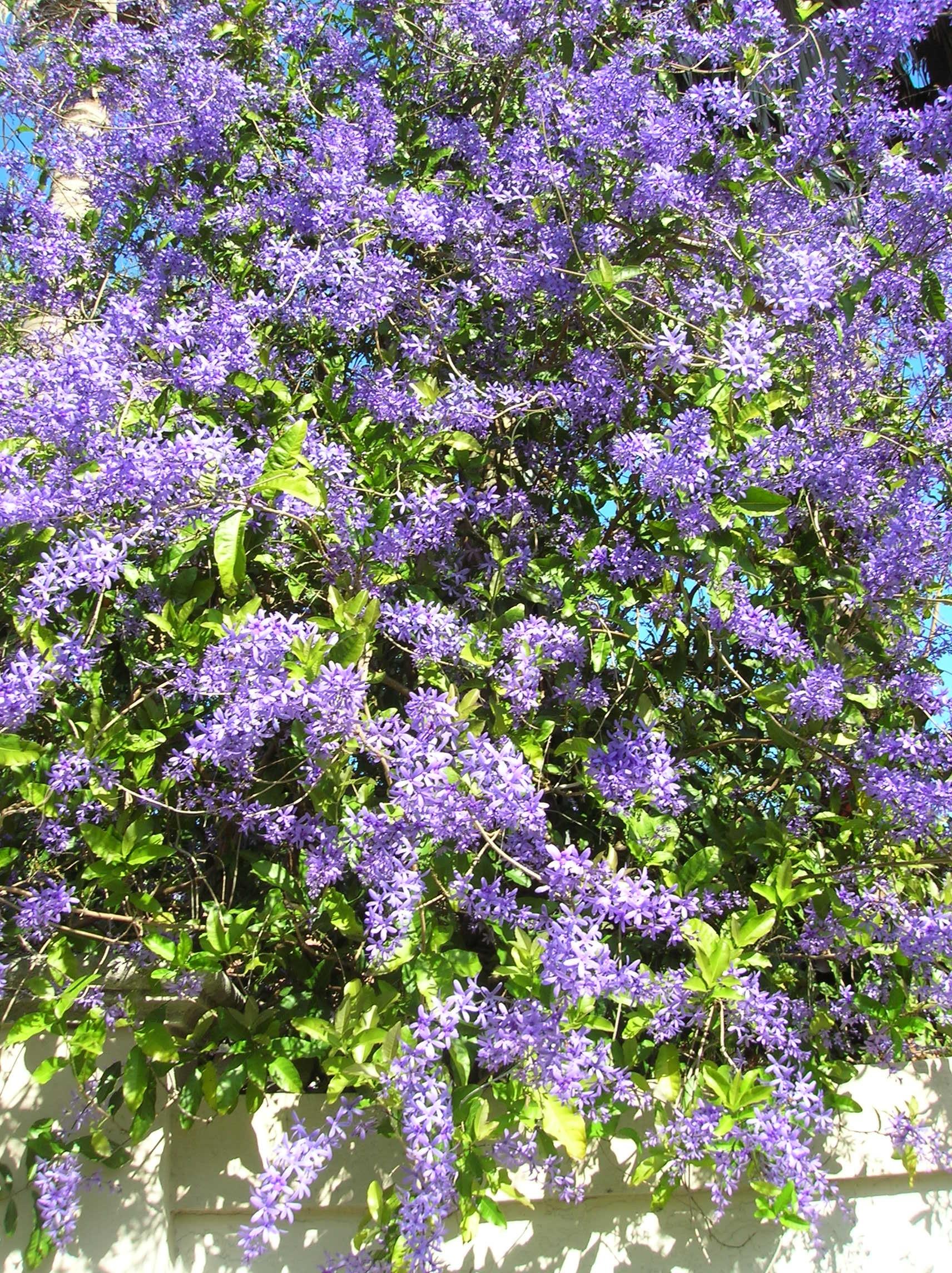 Queen S Wreath Gardeningonthego S Blog