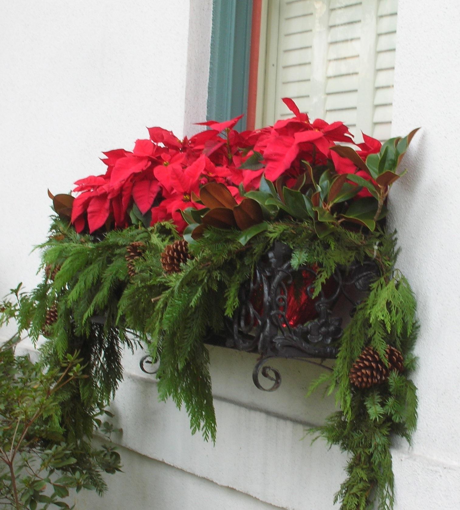 Poinsettia windowbox ii gardeningonthego 39 s blog for Decoration fenetre post it
