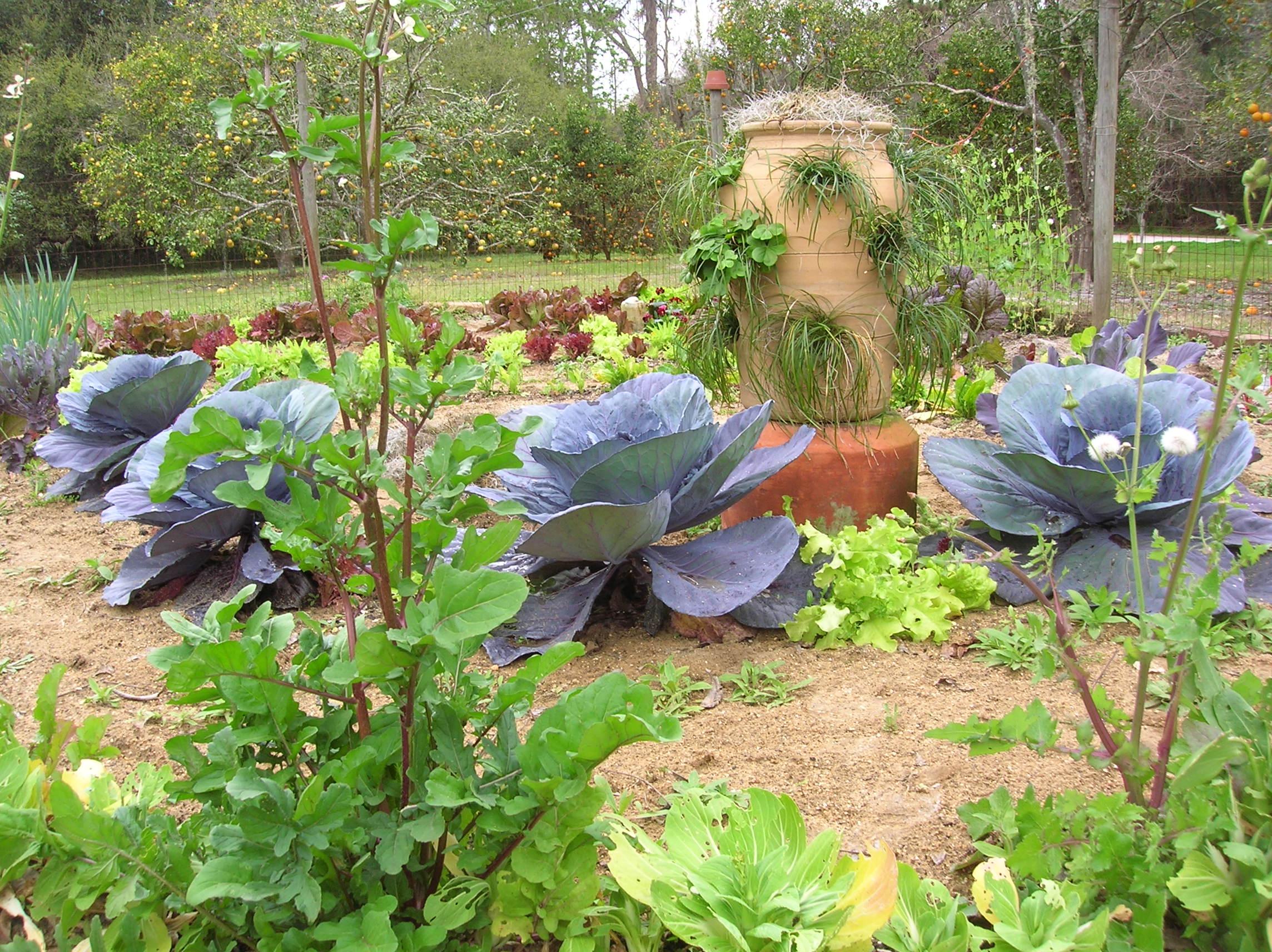 in the winter garden gardeningonthego u0027s blog