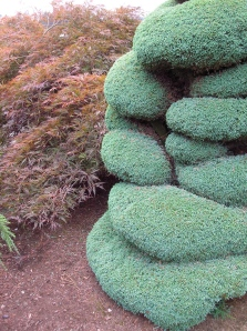 Not your usual approach to topiary, this specimen works on many levels — including textural and colorwise,