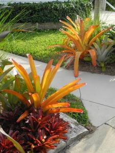 orange:red bromelds