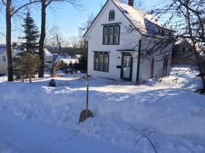 6 Cedar in deep snow